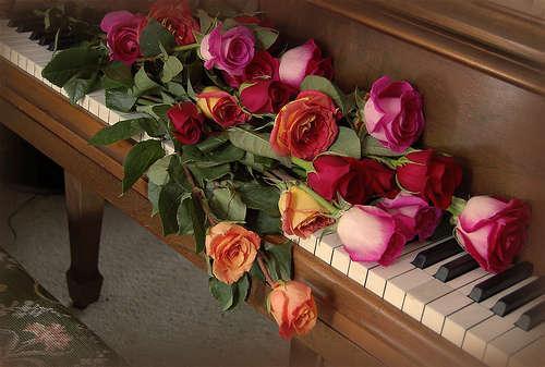 розы и рояль